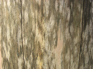 close-up of weathered wooden chopping block